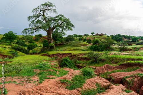 In de dag Baobab Majestic Baobab