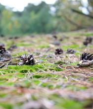 Pinecone Moss  Autumn