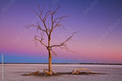 Dead tree at Salton Sea
