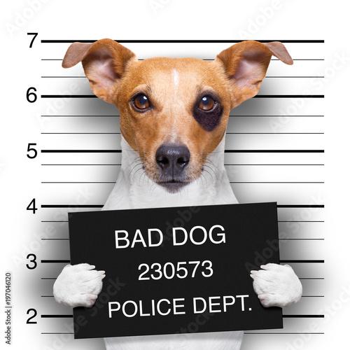 Fototapety, obrazy: mugshot dog at police station