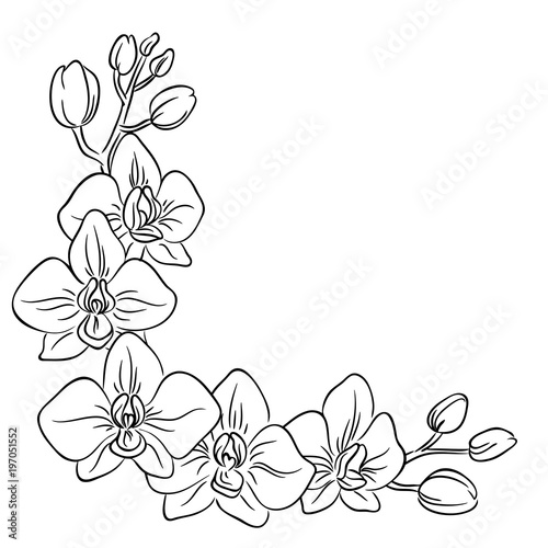 vector contour orchid flower bouquet  symbol coloring page half frame Canvas-taulu