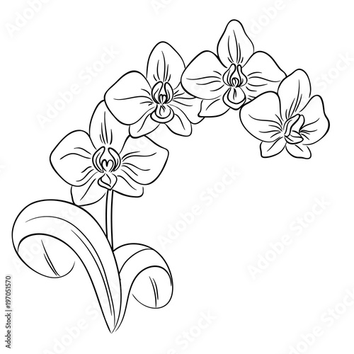 moth orchid coloring pages - photo#18