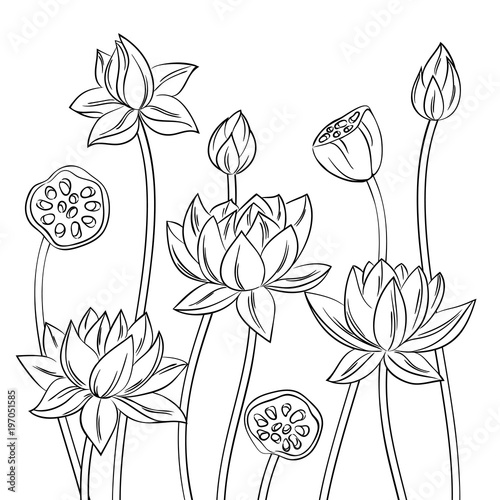 vector contour lotus flower bouquet set meditation symbol ...