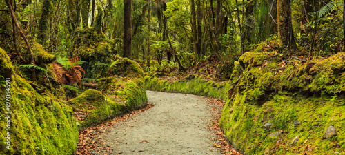 Fotografija colorful fresh bright green moss passage in the park, lichen walkway walking tra