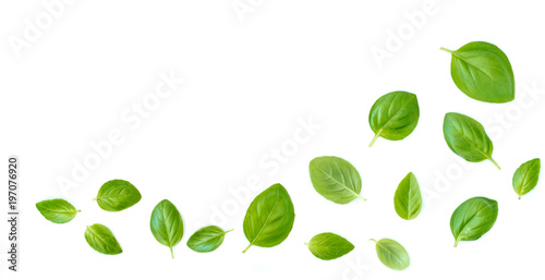 Leinwand Poster Fluing Fresh  basil herb leaves isolated on white background