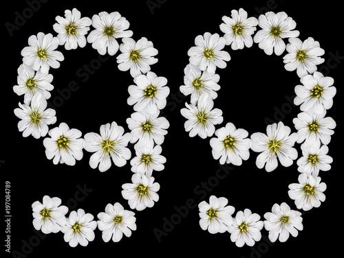 Arabic numeral 99, ninety nine, ninety, nine, from white flowers of Cerastium to Poster
