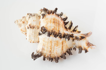 A beautiful sea shell