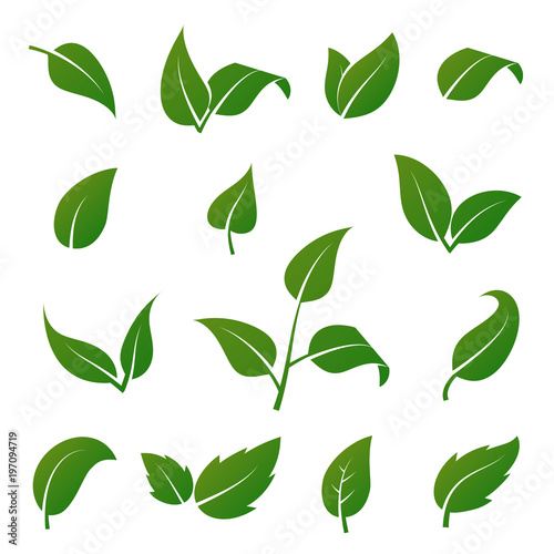 Fototapeta Green tree and plant leaves vector icons isolated on white background. Eco symbols set obraz na płótnie
