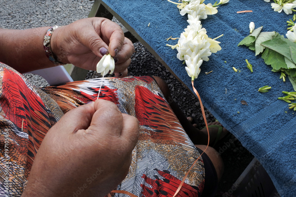 Fototapeta Cook Islander mature woman sewing a frangipani flowers lei Rarotonga Cook Islands