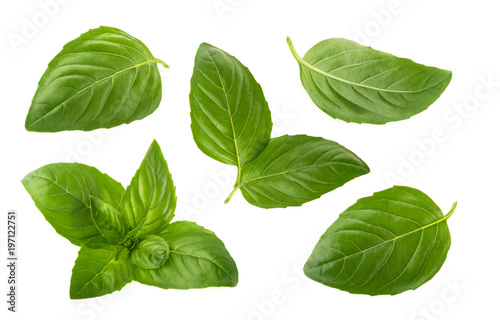 Poster Condiments Basil leaves isolated on white background