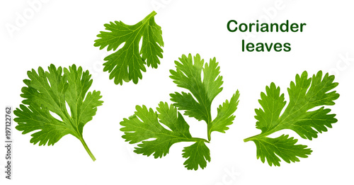 Recess Fitting Aromatische Coriander leaf isolated without shadow