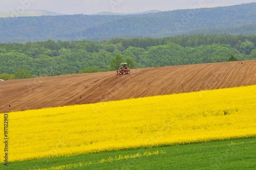 Staande foto Meloen ナノハナ畑と農作業