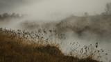 Morning fog landscape - 197123341