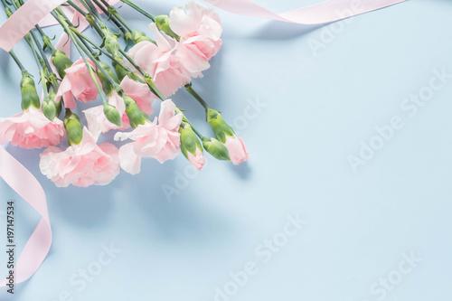 Photo  水色を背景にしたピンクのカーネーション