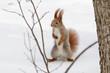 squirrel, animal, winter, snow