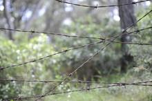 Alambrada Bosque