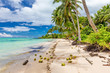 Wild beach with palm trees and coconuts on south side of Upolu, Samoa Islands