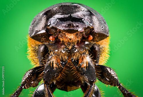Foto op Plexiglas Textures extreme macro of a beetle