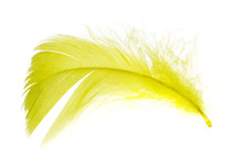 A Beautiful Yellow Feather On ...