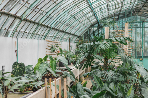 Different plants growing in hothouse
