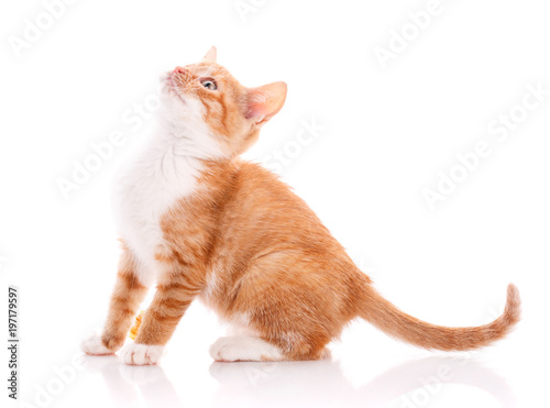 Keuken foto achterwand Kat Cute orange kitten looking up.