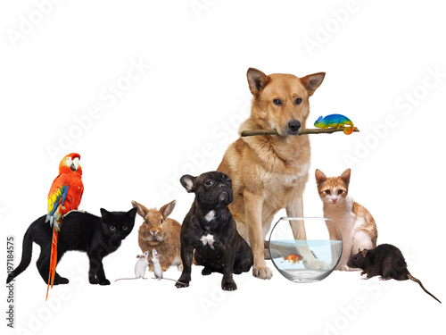Group of Pets. Isolated on white background Poster