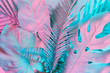 Leinwandbild Motiv Pastel tropical palm leaves