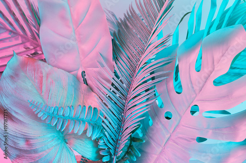 Valokuva  Pastel tropical palm leaves