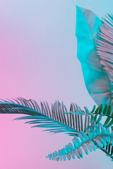 FototapetaPastel tropical palm leaves