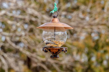 Titmouse On A Feeder With Sunflower Seed In His Mouth.