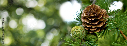 image of pine cone closeup