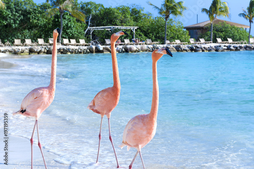 Flamingo on the beach
