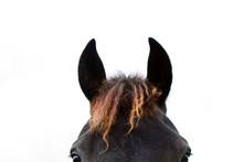 Frame Horse, Black&re  Head.  ...