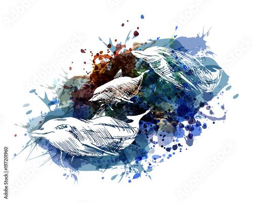 delfiny-ilustracja