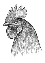 Rooster Head Portrait Illustra...