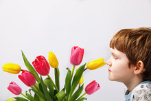 Little Boy Is Sniffing A Tulip...