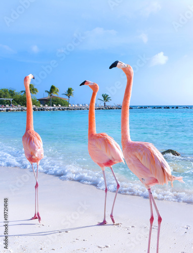 Fotobehang Flamingo Pink flamingo walking on the beach