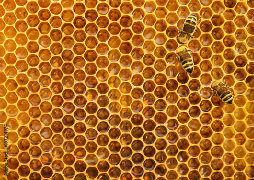 Bees on the honeycomb background, texture with copy space