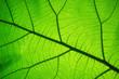 Leinwandbild Motiv Leaf texture pattern for spring background,texture of green leaves,ecology concept