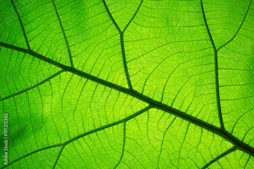 Leaf texture pattern for spring background,texture of green leaves,ecology concept - 197215382
