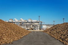 Sugar Beet Pile Of The Field A...