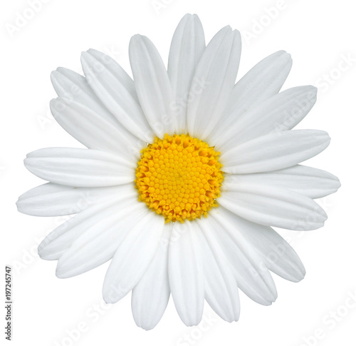 Spoed Foto op Canvas Madeliefjes Beautiful Daisy (Marguerite) isolated on white background, including clipping path.