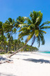 Beautiful coconut trees in Praia dos Carneiros beach, Pernambuco,