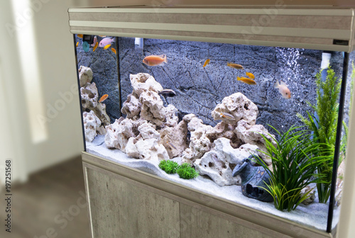 Aquarium with cichlids fish from lake malawi Fotobehang