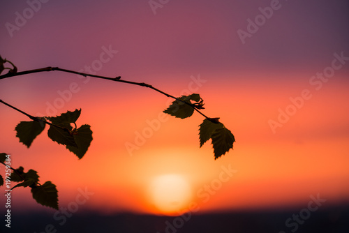 Fotobehang Jacht Bright spring sunset in the evening from the window. Against the background of leaves of tree branches. contours of nature's shadow. Orange yellow red violet fire colors of sky and clouds