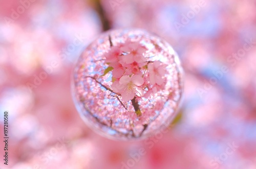 Tuinposter Candy roze 河津桜 葉桜を閉じ込めて