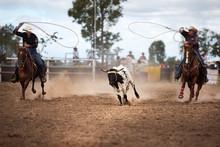 Two Cowboys Roping A Calf At A Rodeo