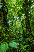 Green Rainforest Texture. Full Frame Trees And Leaves In Tropical Rainforest