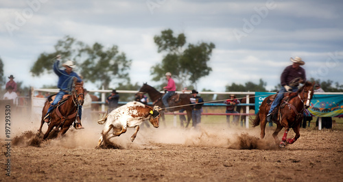 Cuadros en Lienzo  Calf Roping At A Country Rodeo