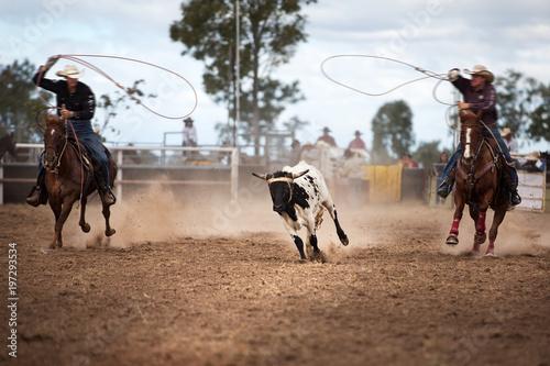 Fotomural  Two Cowboys Roping A Calf At A Rodeo